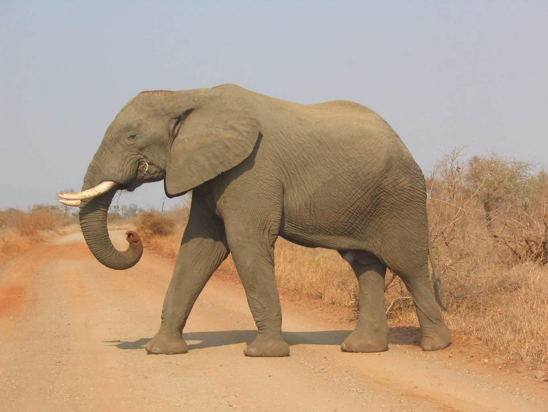 choose your story - elephant